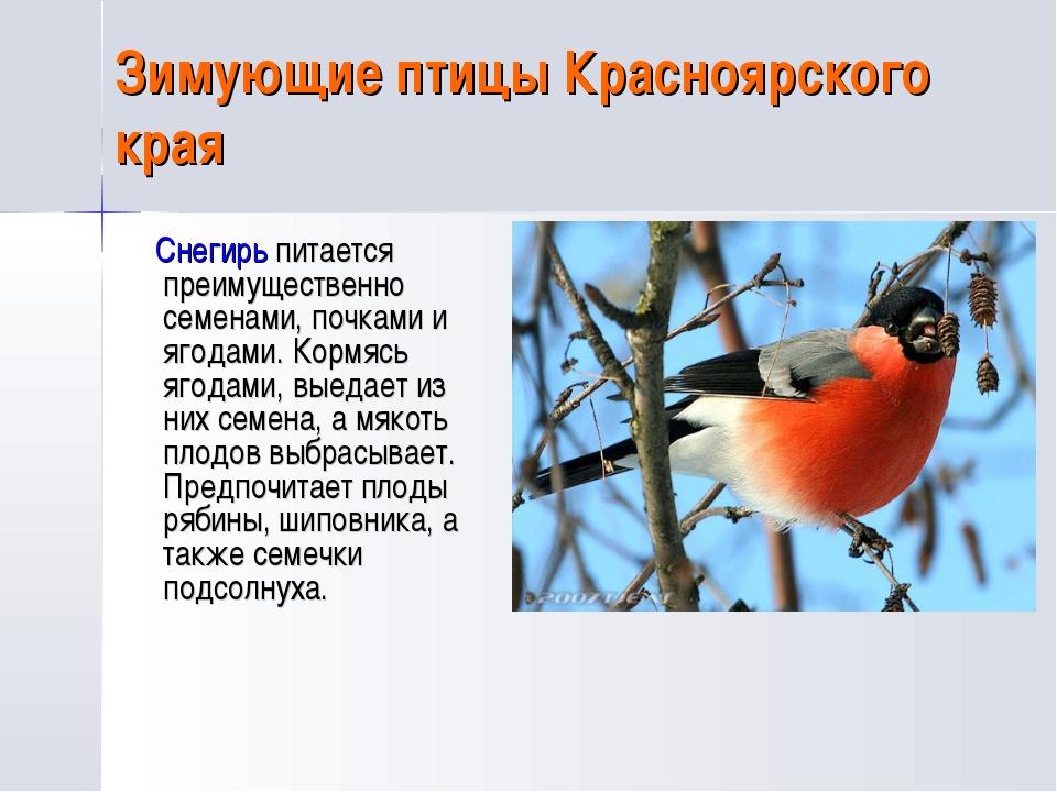 птицы красноярского края картинки и названия птиц кино сделало образ