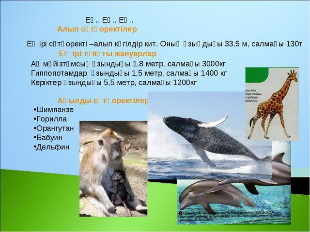 Алып сүтқоректілер Ең ірі сүтқоректі –алып көгілдір кит. Оның ұзыңдығы 33,5 м...