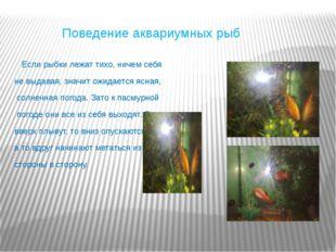 Поведение аквариумных рыб Если рыбки лежат тихо, ничем себя не выдавая, знач