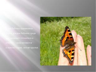 А это бабочка крапивница. Перед дождем бабочки среди дня начинают готовиться
