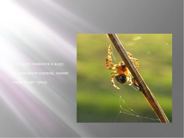 Если паук появился в жару, он запасается кормом, значит скоро будет гроза.