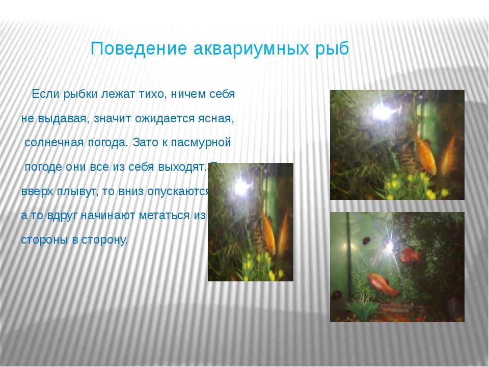 Поведение аквариумных рыб Если рыбки лежат тихо, ничем себя не выдавая, знач...