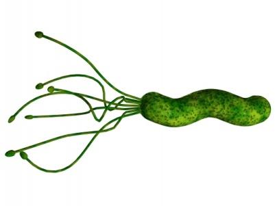 http://www.festivalnauki.ru/sites/default/files/styles/large/public/helicobacter-pylori.jpg?itok=zDkcZZLs