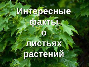 Интересные факты о листьях растений