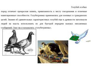 Для транспортировки писем также применяли почтовых голубей. Голубей особых п