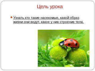 Цель урока Узнать кто такие насекомые, какой образ жизни они ведут, какое у н
