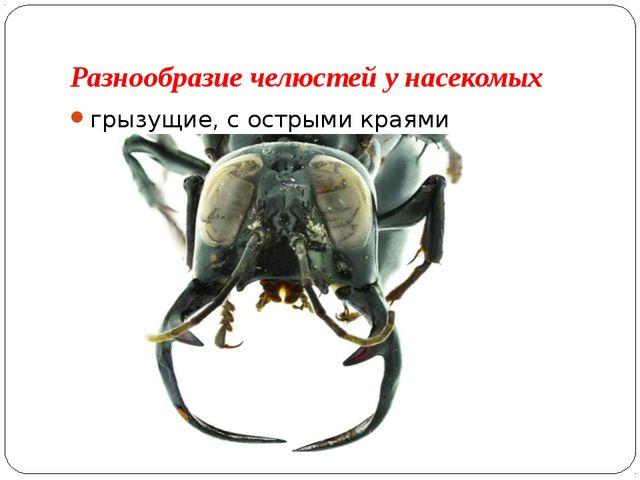 Разнообразие челюстей у насекомых грызущие, с острыми краями