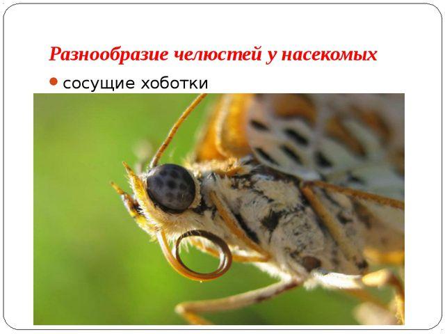 Разнообразие челюстей у насекомых сосущие хоботки