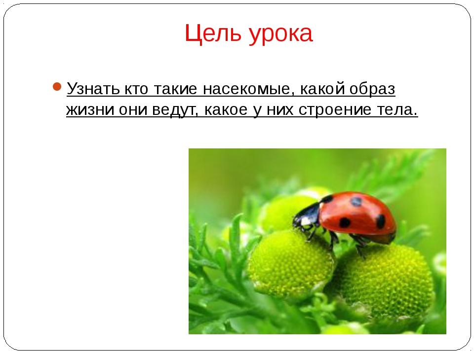 Цель урока Узнать кто такие насекомые, какой образ жизни они ведут, какое у н...