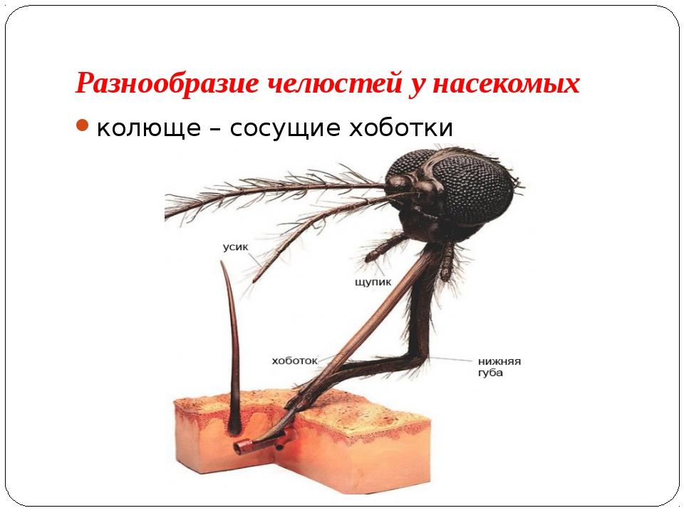 Разнообразие челюстей у насекомых колюще – сосущие хоботки