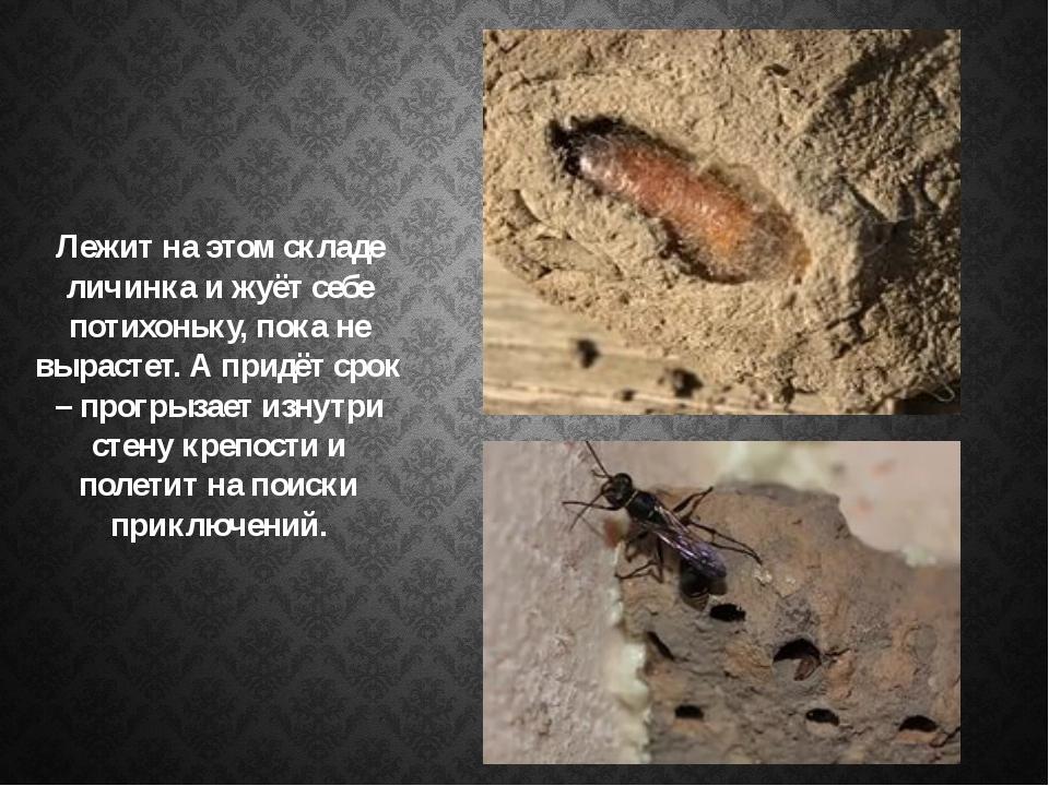 Лежит на этом складе личинка и жуёт себе потихоньку, пока не вырастет. А прид...