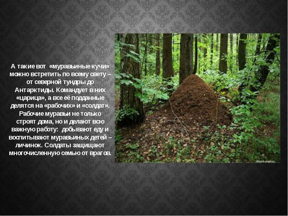 А такие вот «муравьиные кучи» можно встретить по всему свету – от северной ту...