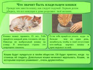 Что значит быть владельцем кошки Прежде чем завести кошку, как следует подума