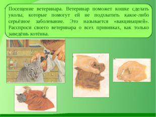 Посещение ветеринара. Ветеринар поможет кошке сделать уколы, которые помогут