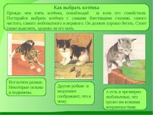Как выбрать котёнка Прежде чем взять котёнка, понаблюдай за всем его семейств