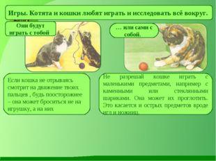 Игры. Котята и кошки любят играть и исследовать всё вокруг. Они будут играть