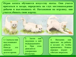Играя котята обучаются искусству охоты. Они учатся прятаться в засаде, опреде