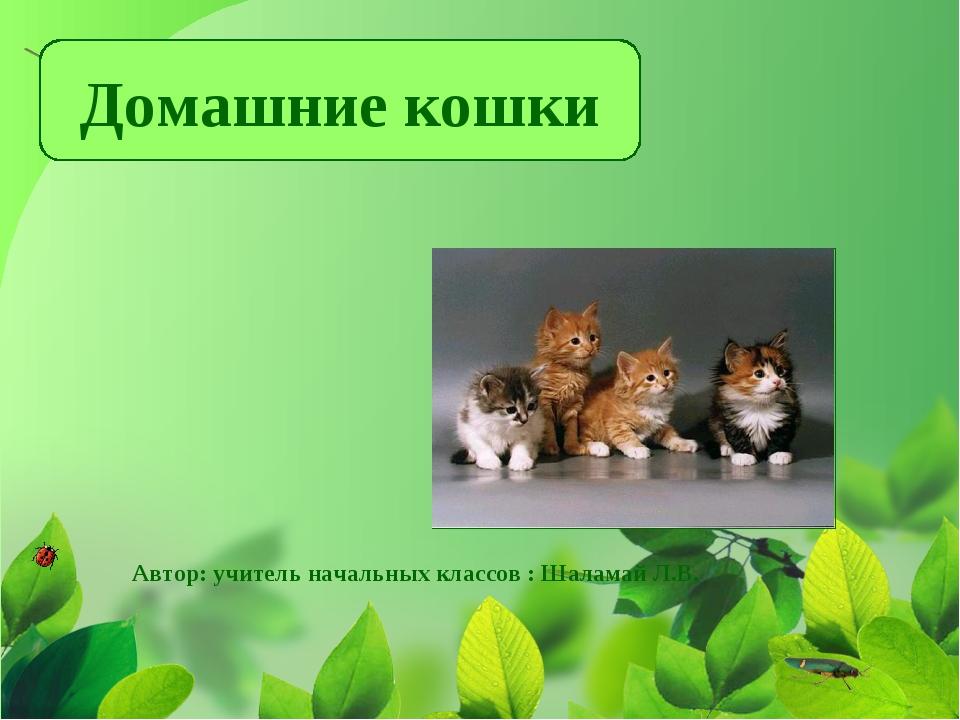 Домашние кошки Автор: учитель начальных классов : Шаламай Л.В.
