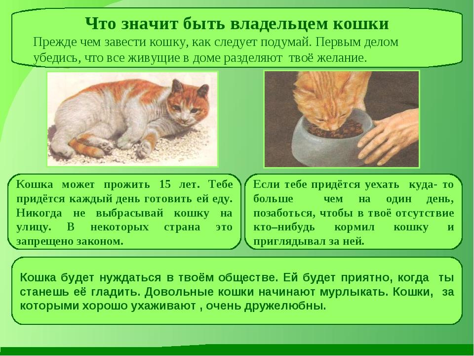 Что значит быть владельцем кошки Прежде чем завести кошку, как следует подума...