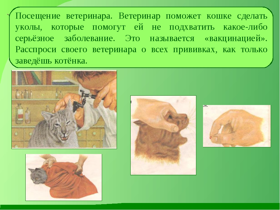 Посещение ветеринара. Ветеринар поможет кошке сделать уколы, которые помогут...