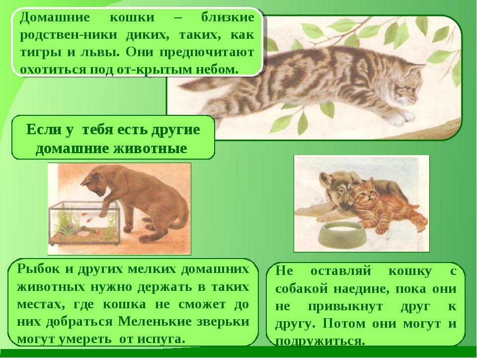 Домашние кошки – близкие родствен-ники диких, таких, как тигры и львы. Они пр...