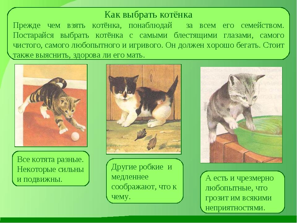 Как выбрать котёнка Прежде чем взять котёнка, понаблюдай за всем его семейств...