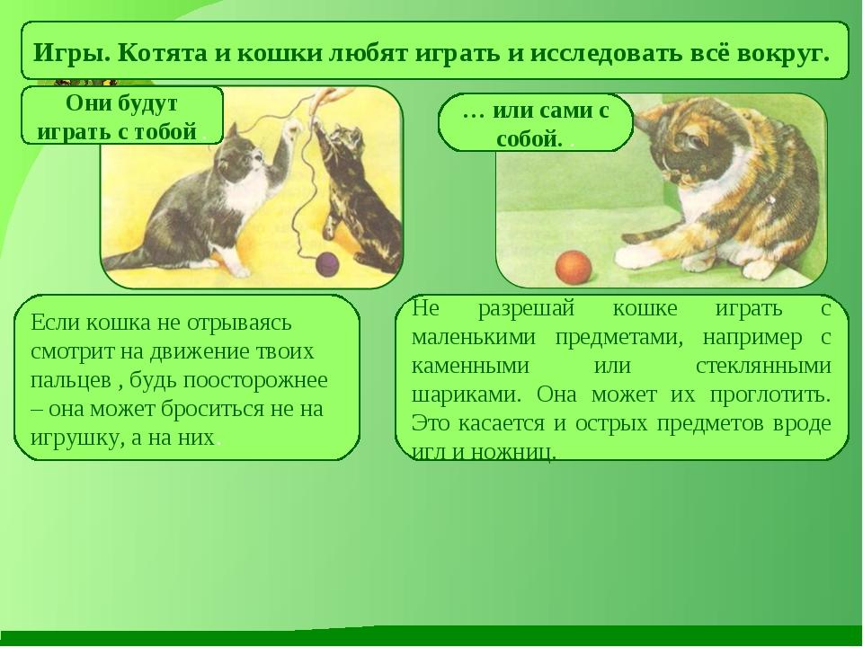 Игры. Котята и кошки любят играть и исследовать всё вокруг. Они будут играть...