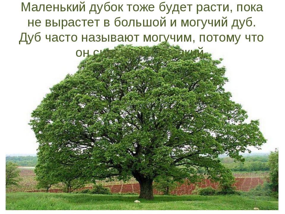 Маленький дубок тоже будет расти, пока не вырастет в большой и могучий дуб. Д...