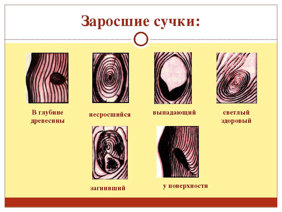 zdorovie-srosshiesya-suchki