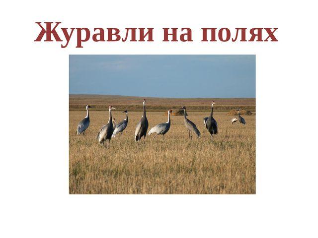 Журавли на полях