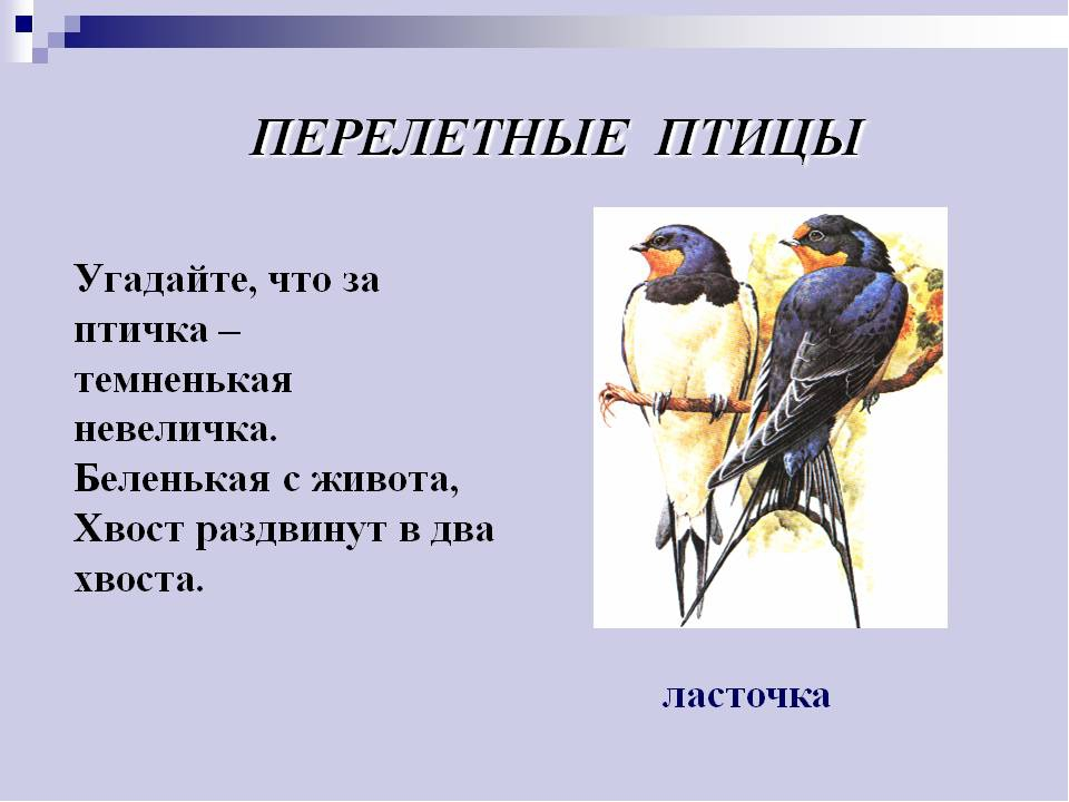 Февраля, картинки на тему птицы весной для презентации