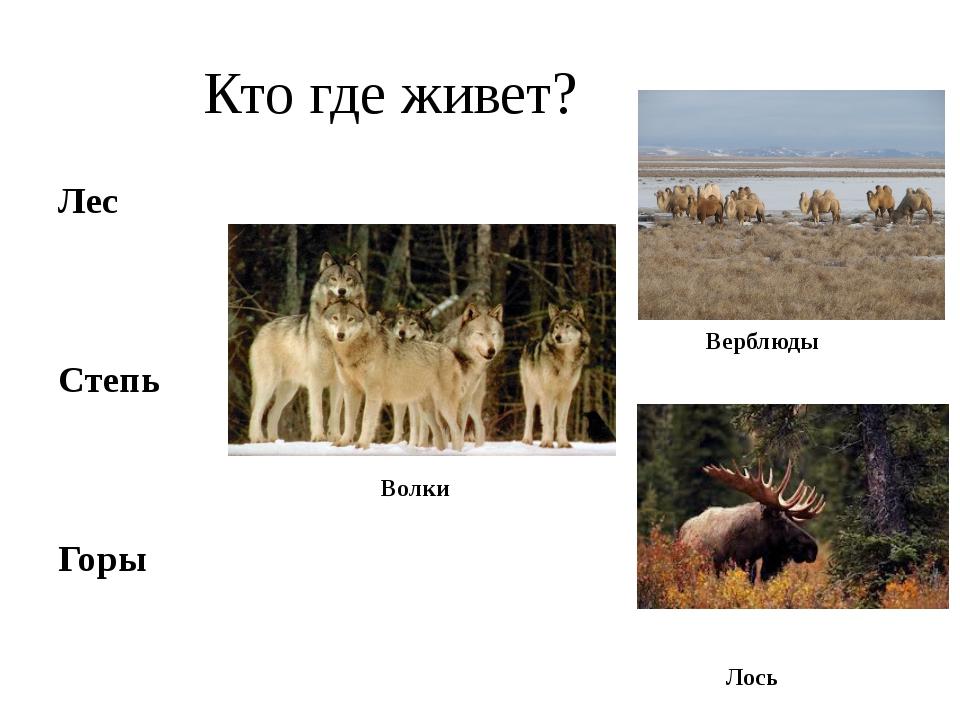 Кто где живет? Лес Степь Горы Верблюды Волки Лось