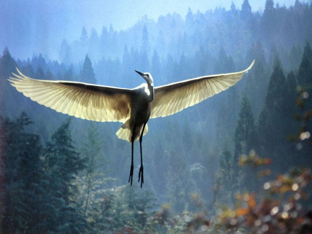 http://900igr.net/datai/biologija/Tema-Ptitsy/0007-008-Vidovoe-raznoobrazie-ptits.jpg