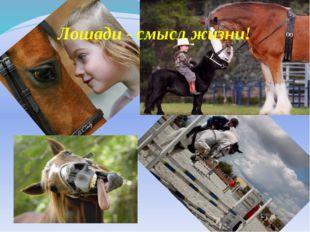 Лошади - смысл жизни!
