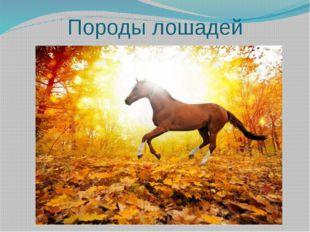 Породы лошадей