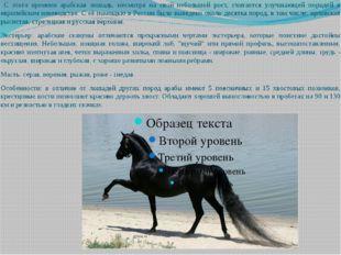 С этого времени арабская лошадь, несмотря на свой небольшой рост, считается