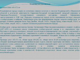 Владимирская тяжеловозная высота в холке 165-172 см Владимирская породасозда