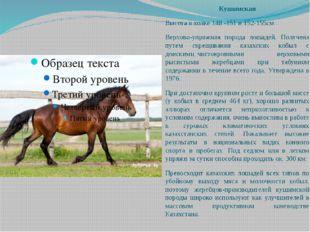 Кушимская Высота в холке 148 -151 и 152-155см . Верхово-упряжная порода лошад