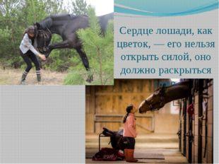 Сердце лошади, как цветок, — его нельзя открыть силой, оно должно раскрыться