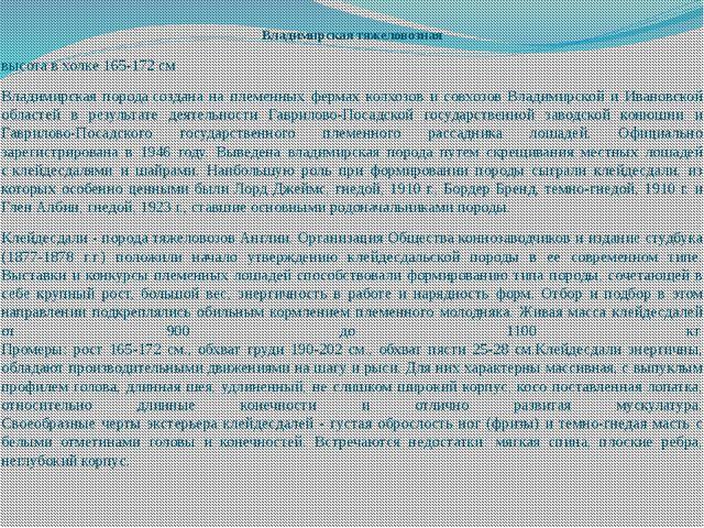 Владимирская тяжеловозная высота в холке 165-172 см Владимирская породасозда...