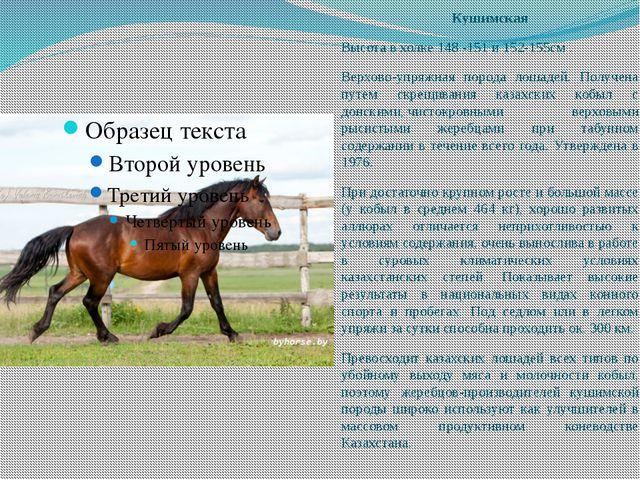 Кушимская Высота в холке 148 -151 и 152-155см . Верхово-упряжная порода лошад...