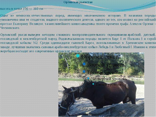 Орловская рысистая высота в холке 156 — 160 см. Одна из немногихотечественны...