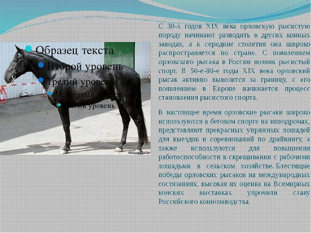 С 30-х годов XIX века орловскую рысистую породу начинают разводить в других к...