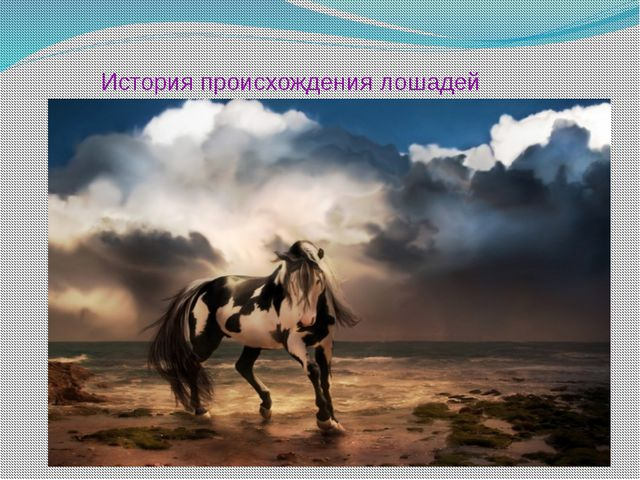 История происхождения лошадей