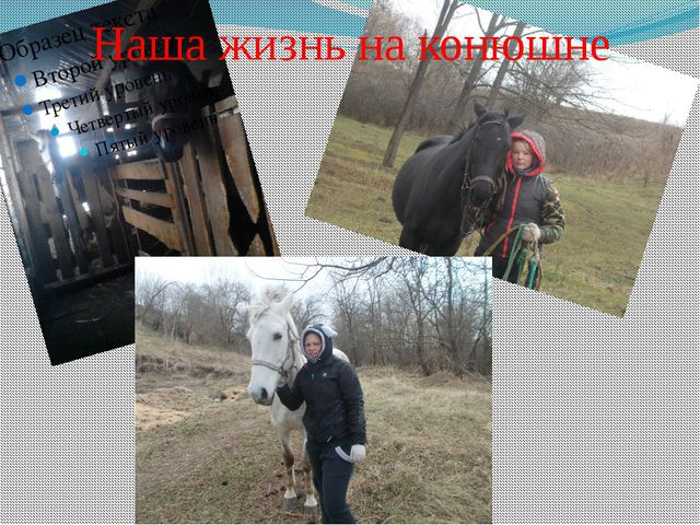 Наша жизнь на конюшне
