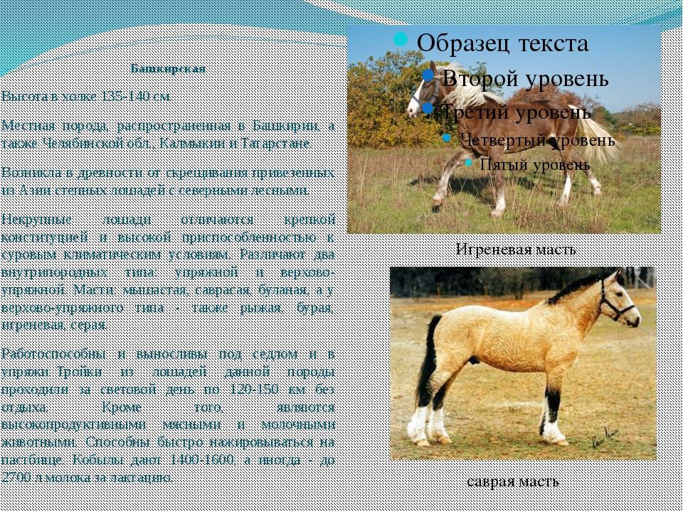 Башкирская Высота в холке 135-140 см. Местная порода, распространенная в Башк...