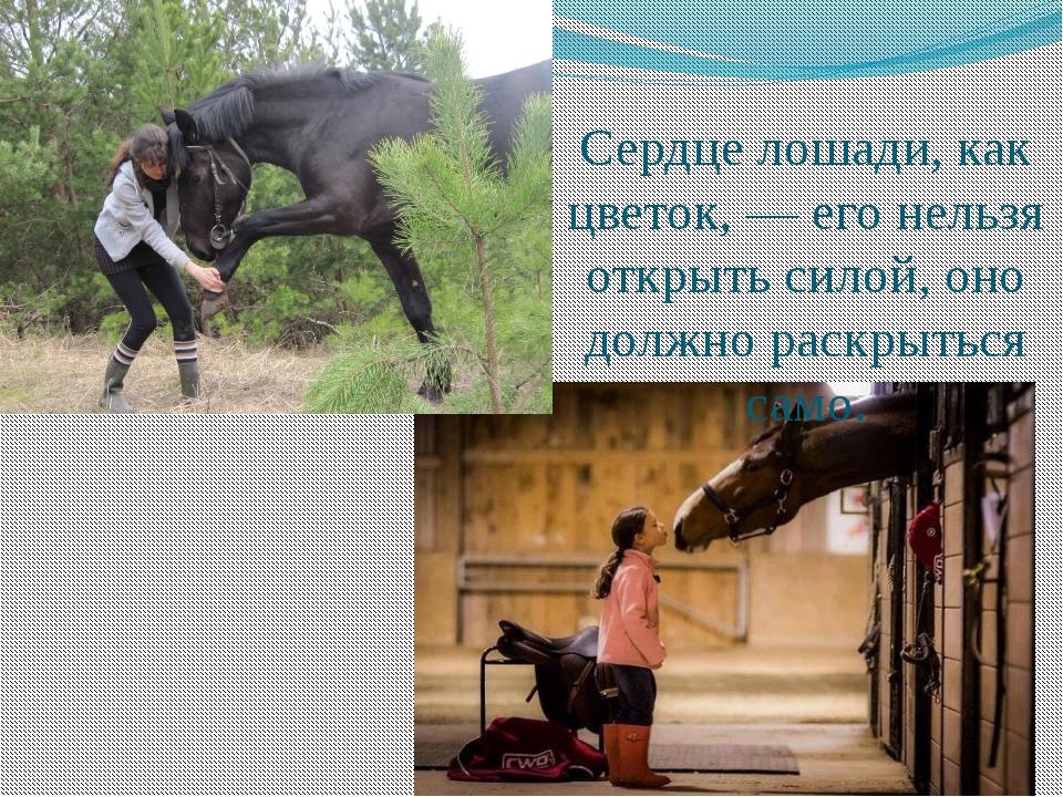Сердце лошади, как цветок, — его нельзя открыть силой, оно должно раскрыться...