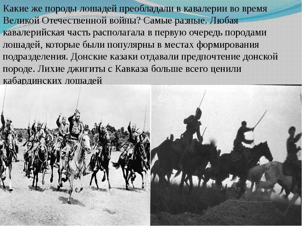 Какиеже породы лошадей преобладали вкавалерии вовремя Великой Отечественно...