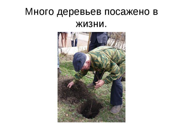 Много деревьев посажено в жизни.