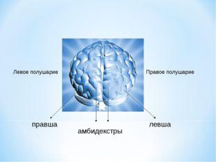 Левое полушарие Правое полушарие правша левша амбидекстры